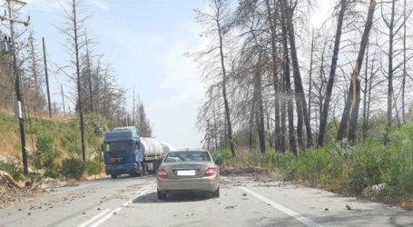 Προβλήματα και πτώσεις δέντρων λόγω ισχυρών ανέμων