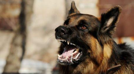 Σκύλος δάγκωσε δίδυμα στο Ηράκλειο