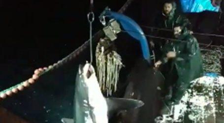 Ψάρεψαν καρχαρία 200 κιλών στην Καβάλα