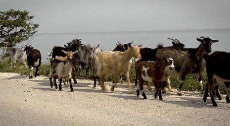 ΗHandelsblatt αναφέρεται στον υπερπληθυσμό των κατσικιών στη Σαμοθράκη