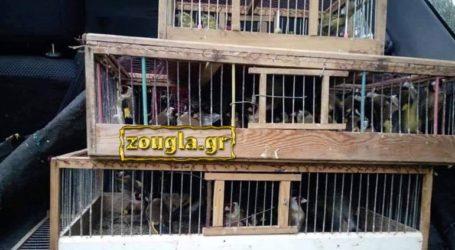 Συνεχίζεται το παράνομο εμπόριο άγριων πτηνών στη λεωφόρο Σχιστού