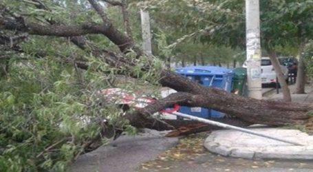 Ζημιές υπέστησαν αυτοκίνητα από πτώση δέντρου