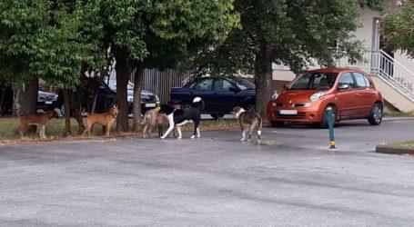 Επιθέσεις από αδέσποτους σκύλους στο νοσοκομείο Κιλκίς