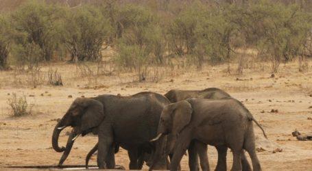 Περισσότεροι από 50 ελέφαντες θύματα της ξηρασίας σε διάστημα ενός μήνα