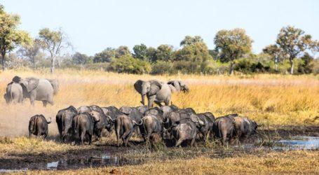 Θύματα της ξηρασίας 100 ελέφαντες
