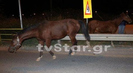 Άλογα «δραπέτευσαν» και προκάλεσαν κυκλοφοριακό πρόβλημα