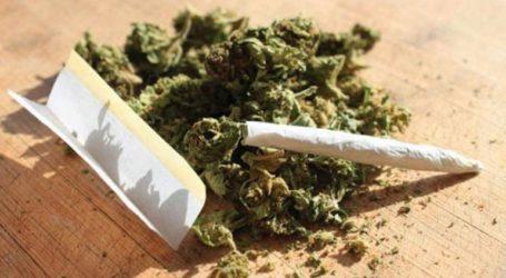 Σύλληψη 23χρονου για καλλιέργεια κάνναβης στο Ηράκλειο