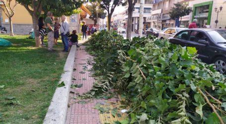 Ξεκίνησαν τα κλαδέματα στα δέντρα της πόλης