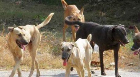 Μέτρα στον Τύρναβο μετά τις τελευταίες επιθέσεις αδέσποτων ζώων