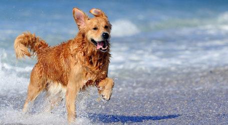 Φρίκη στον Βόλο: Έδεσαν πέτρες σε σκύλο και τον πέταξαν στη θάλασσα