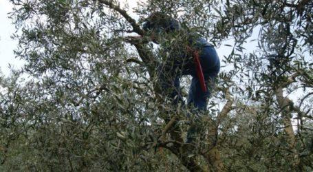 Τραυματισμός άντρα στη Λάρισα – Πήγε να κόψει το κλαδί και έπεσε από το δέντρο