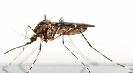 Συνεχίζεται η κουνουποκτονία σε Βόλο και Μαγνησία