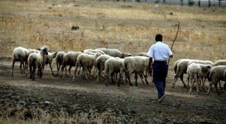 Κτηνοτροφικός Σύλλογος Τυρνάβου: «Ο Βορίδης δεν στέκεται στο πλευρό των κτηνοτρόφων»