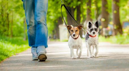 Ομαδική… βόλτα σκύλων στην παραλία του Βόλου