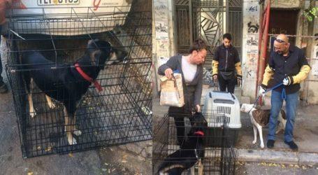 Ο Δήμος Αθηναίων παρέλαβε ζώα που βρέθηκαν στο υπό κατάληψη κτήριο