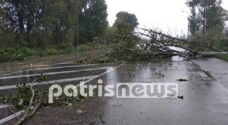 Κλειστή η Εθνική Οδός από πτώση δέντρων έπειτα από νεροποντή