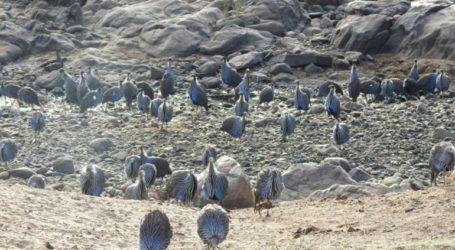 Την πρώτη πολύπλοκη κοινωνία πουλιών ανακάλυψε Ελληνίδα ζωολόγος
