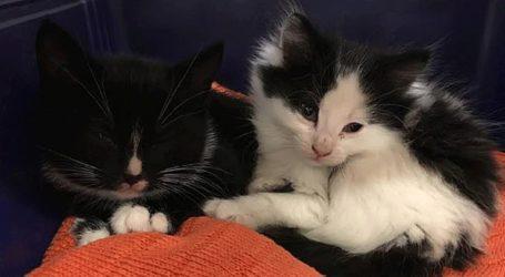 Ζευγάρι παράτησε γατάκια σε γλάστρα εμπορικού κέντρου