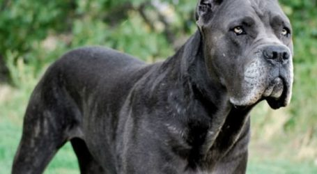 Με θλαστικά τραύματα νοσηλεύεται παιδί που δέχτηκε επίθεση από σκυλιά