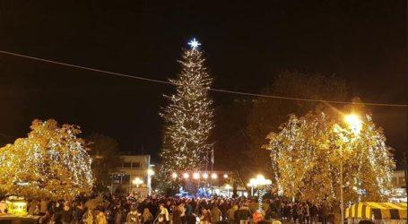 Φωταγωγείται το υψηλότερο φυσικό χριστουγεννιάτικο δέντρο της Ελλάδας