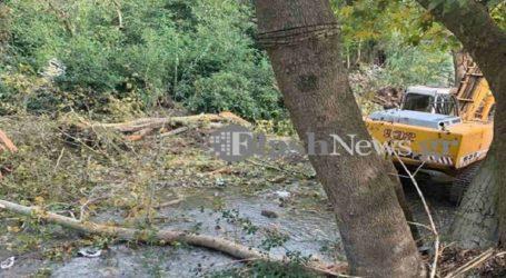 67χρονος έχασε τη ζωή του από πτώση δέντρου