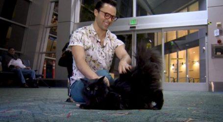 Βρέθηκε αγνοούμενος γάτος μετά από πέντε χρόνια, 1.900 χλμ μακριά από το σπίτι του ιδιοκτήτη του