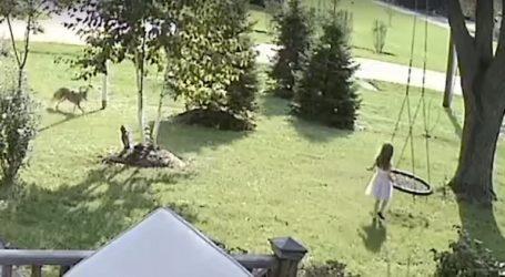 Κογιότ επιτέθηκε σε κοριτσάκι που έπαιζε στην αυλή