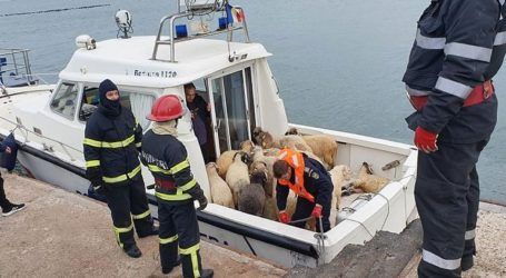 Επιχείρηση διάσωσης 14.600 προβάτων από πλοίο που έχει πάρει κλίση