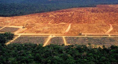 Ξεπέρασε τα 10.000 τετραγωνικά χιλιόμετρα η επιφάνεια του Αμαζονίου που αποψιλώθηκε