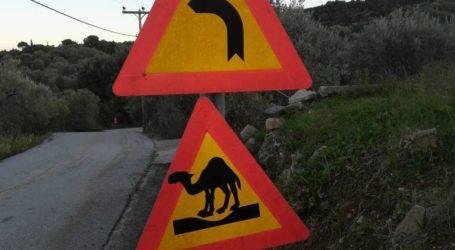 Απίστευτο! Σήμανση για καγκουρό και καμήλες στο Πήλιο [εικόνες]