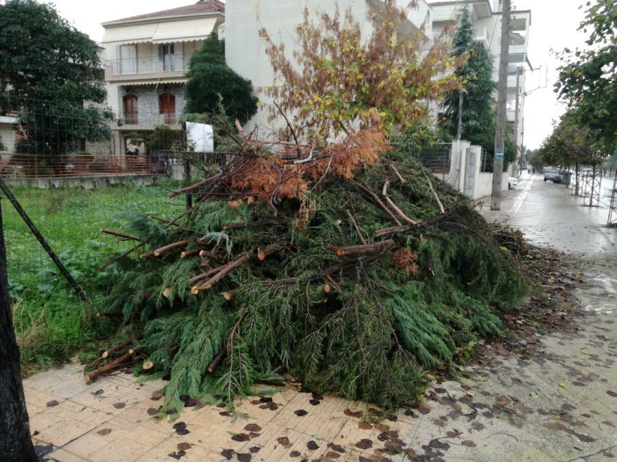 Λάρισα: Κλάδεψε τα δέντρα της αυλής του και τα παράτησε στο πεζοδρόμιο για περισσότερο από μήνα (φωτο)
