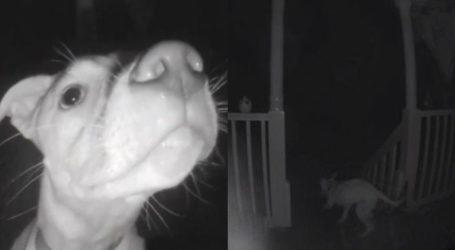 Σκύλος χτυπάει το κουδούνι στις 2 τα ξημερώματα επειδή τον κλείδωσαν έξω από το σπίτι