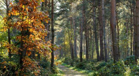 Παν. Κουτσάφτης: Διαμορφώνουμε ελκυστικό περιβάλλον για την ανάπτυξη ήπιων κι εναλλακτικών μορφών τουρισμού
