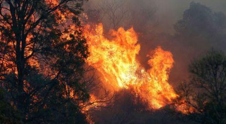 Τέσσερις νεκροί από τις φωτιές -Περίπου 150 τα μέτωπα πυρκαγιάς