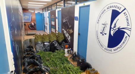 Εντοπίσθηκε εργαστήριο καλλιέργειας κάνναβης στο Αιγάλεω