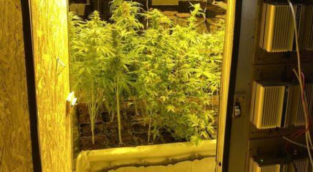 Παράνομο εργαστήριο καλλιέργειας χασίς με είσοδο από τη ντουλάπα κρεβατοκάμαρας!