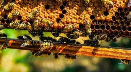 Δύο άνδρες στη Χαλκιδική έκλεβαν κυψέλες μελισσών