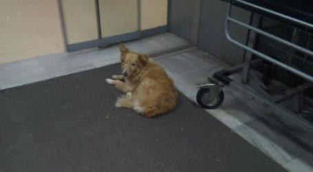 Ο Χάτσικο του Βόλου – Ένας σκύλος εδώ και πέντε χρόνια περιμένει στο Νοσοκομείο… τον ιδιοκτήτη του που πέθανε!