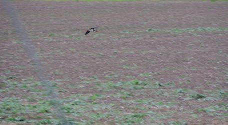 Τα πουλιά «μίλησαν» για την κακοκαιρία που έρχεται [εικόνες]