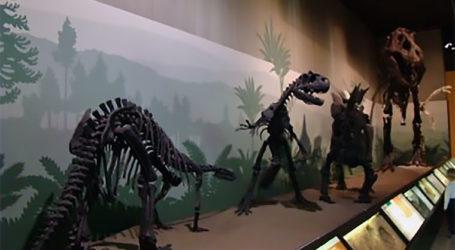 Χριστούγεννα στο Μουσείο Φυσικής Ιστορίας Βόλου