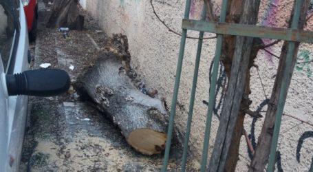Καταγγελία Λαρισαίου: Παρατημένο εδώ και δύο χρόνια πεζοδρόμιο στην οδό Πλαστήρα (φωτο)