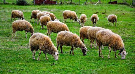 Η Περιφ. Ενότητα Μαγνησίας ενημερώνει τους κτηνοτρόφους για την ανακατανομή βοσκοτόπων
