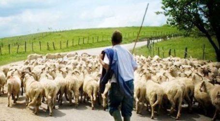 Ενίσχυση των αιγοπροβατοτρόφωντης χώρας μέσω de minimis για το 2019 ζητά ο κτηνοτροφικός σύλλογος δήμου Τυρνάβου