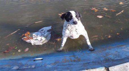 Μαγνησία: Κτηνοτρόφος έσωσε σκύλο που έπεσε σε τεχνητή λίμνη