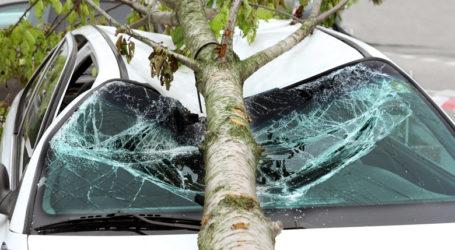 Βόλος: Μεθυσμένος οδηγός έχασε τον έλεγχο και κατέληξε σε δέντρο