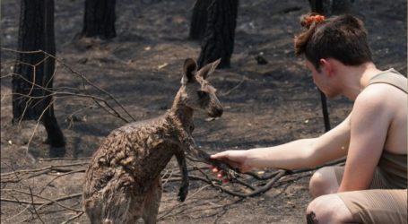 Καγκουρό ξέφυγε από την πύρινη κόλαση στην Αυστραλία και ζητά βοήθεια