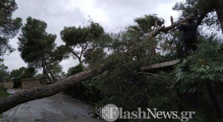 Μεγάλο δέντρο έπεσε από τον δυνατό αέρα στα Χανιά