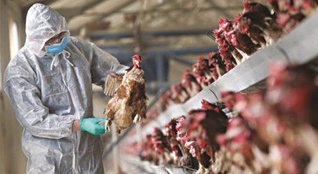 Δεύτερο κρούσμα γρίπης των πτηνών στη Ρουμανία