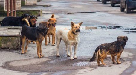 Χώρο για την ίδρυση καταφυγίου αδέσποτων ζώων και δημοτικού κτηνιατρείου αναζητά ο δήμος Αθηναίων