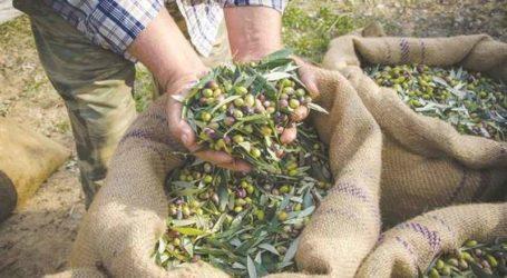 Ενημερωτική συγκέντρωση για τους ελαιοπαραγωγούς Νοτίου Πηλίου από τον Χ. Μπουκώρο
